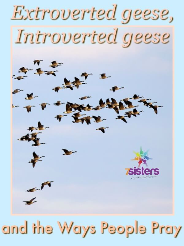 Extroverted Geese, Introverted Geese, and the Ways People Pray 7SistersHomeschool.com