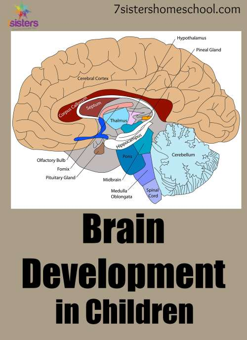 Brain development activities for toddlers photo 10